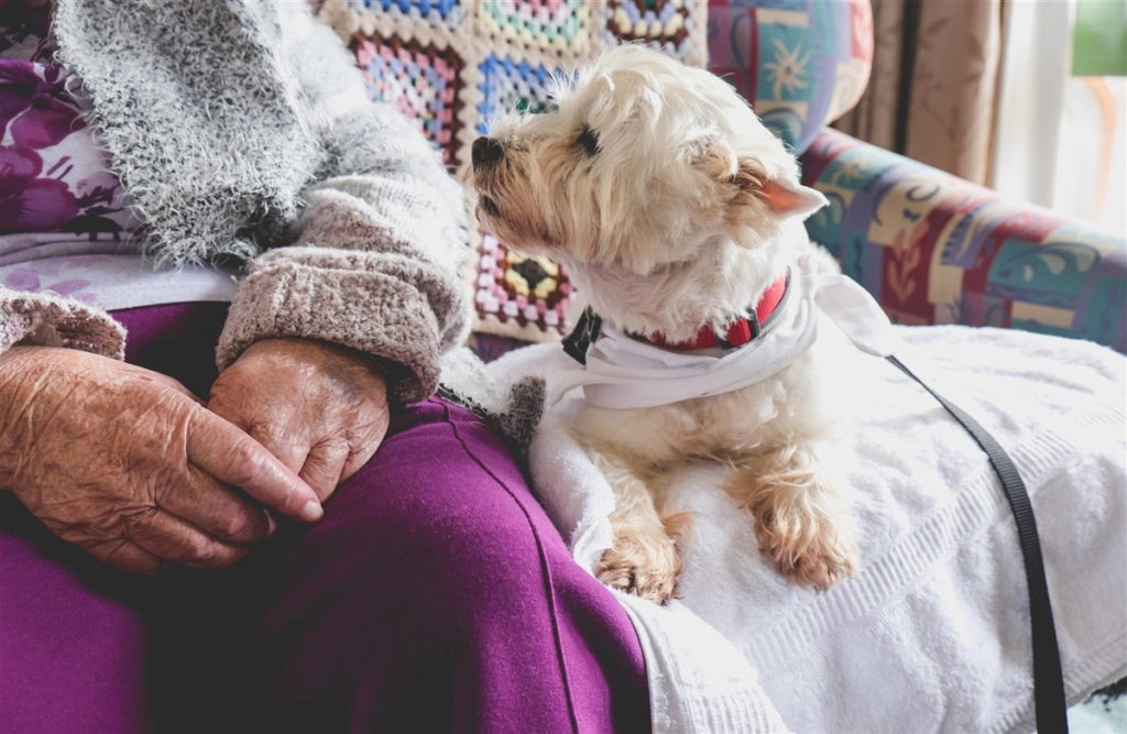 Therapy pet on couch next to elderly person in retirement rest home for seniors - dog is looking at elderly person